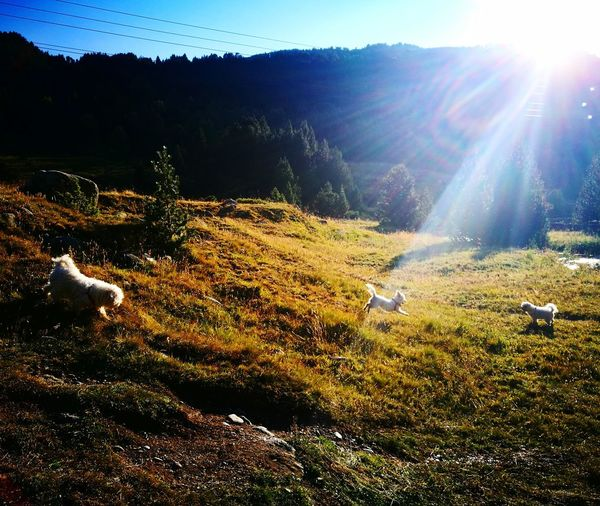 Enjoying nature Landscape Nature Summer Bichon Frise Andorra
