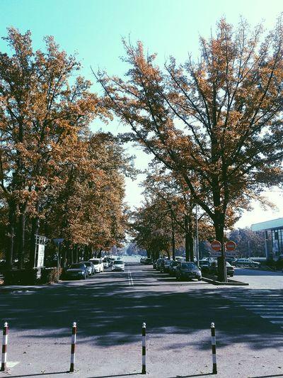 Tree Road The Way Forward Walking