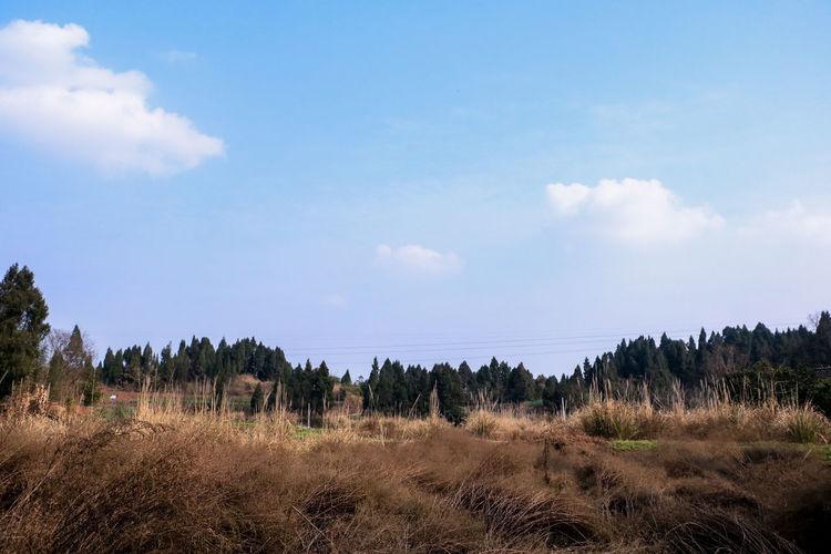 冬日景色 Winter