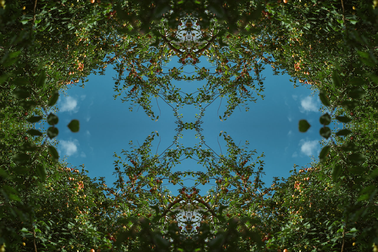 DIGITAL COMPOSITE OF TREES AGAINST SKY