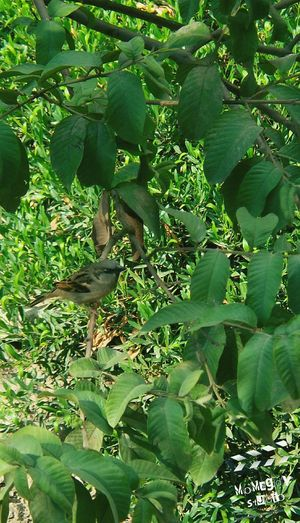 Bird Trees Green Green Leafs Branches Morning Nature This Is Egypt MoMagdyStudio