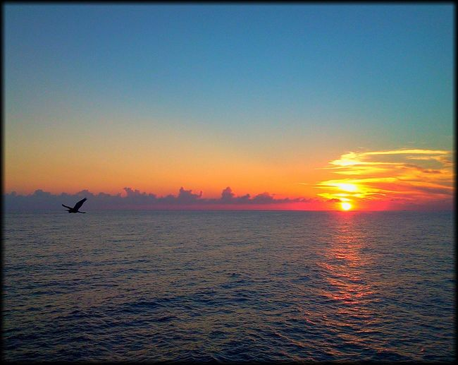 Life Is A Beach Sunsets Photography In Motion Sundown Sunset Landscapes With WhiteWall Oceanside Beach Photography Ocean Ocean Bird Seagull Things I Like