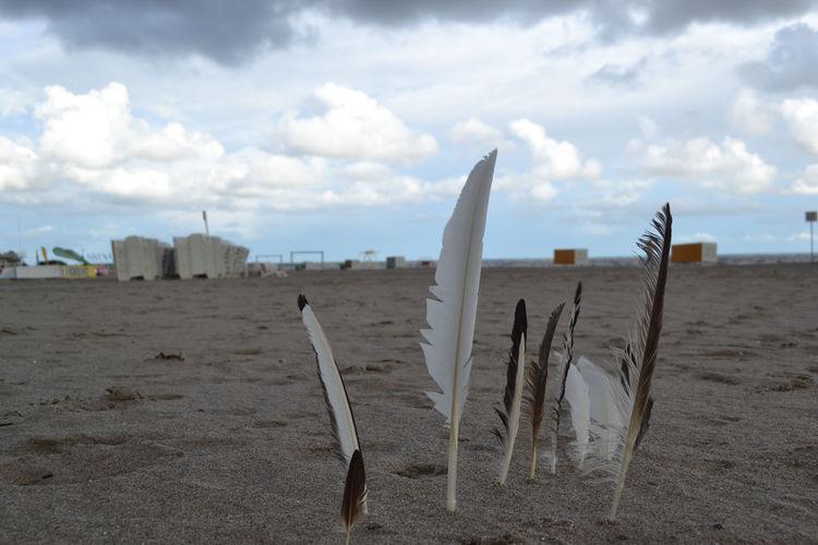 Feathers stuck in sandy beach against cloudy sky