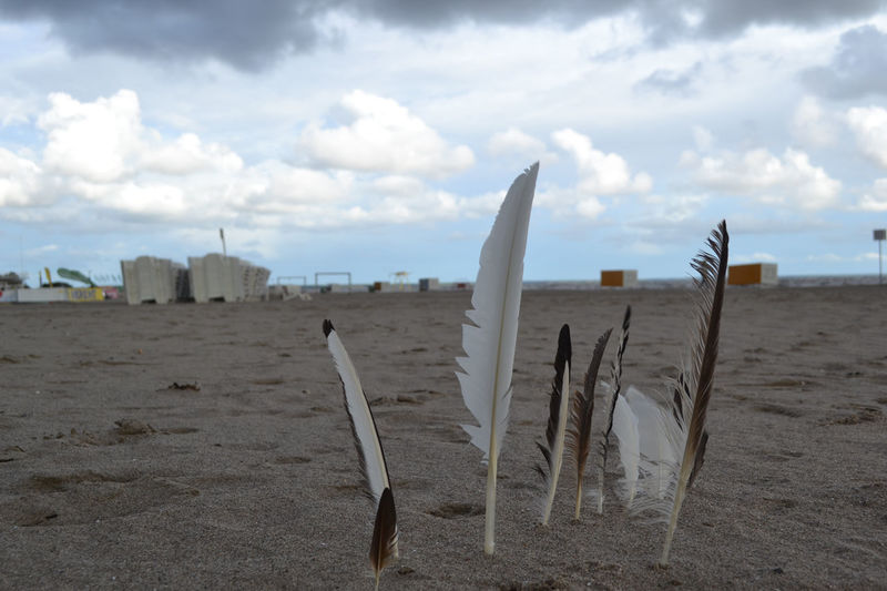 Baltic Coast Beach Beach Fun Feathers Feathers And Wind Feathers Of A Bird Sand And Beach Seaside Tranquility No People Focus On Foreground Low Angle View Beach Walk