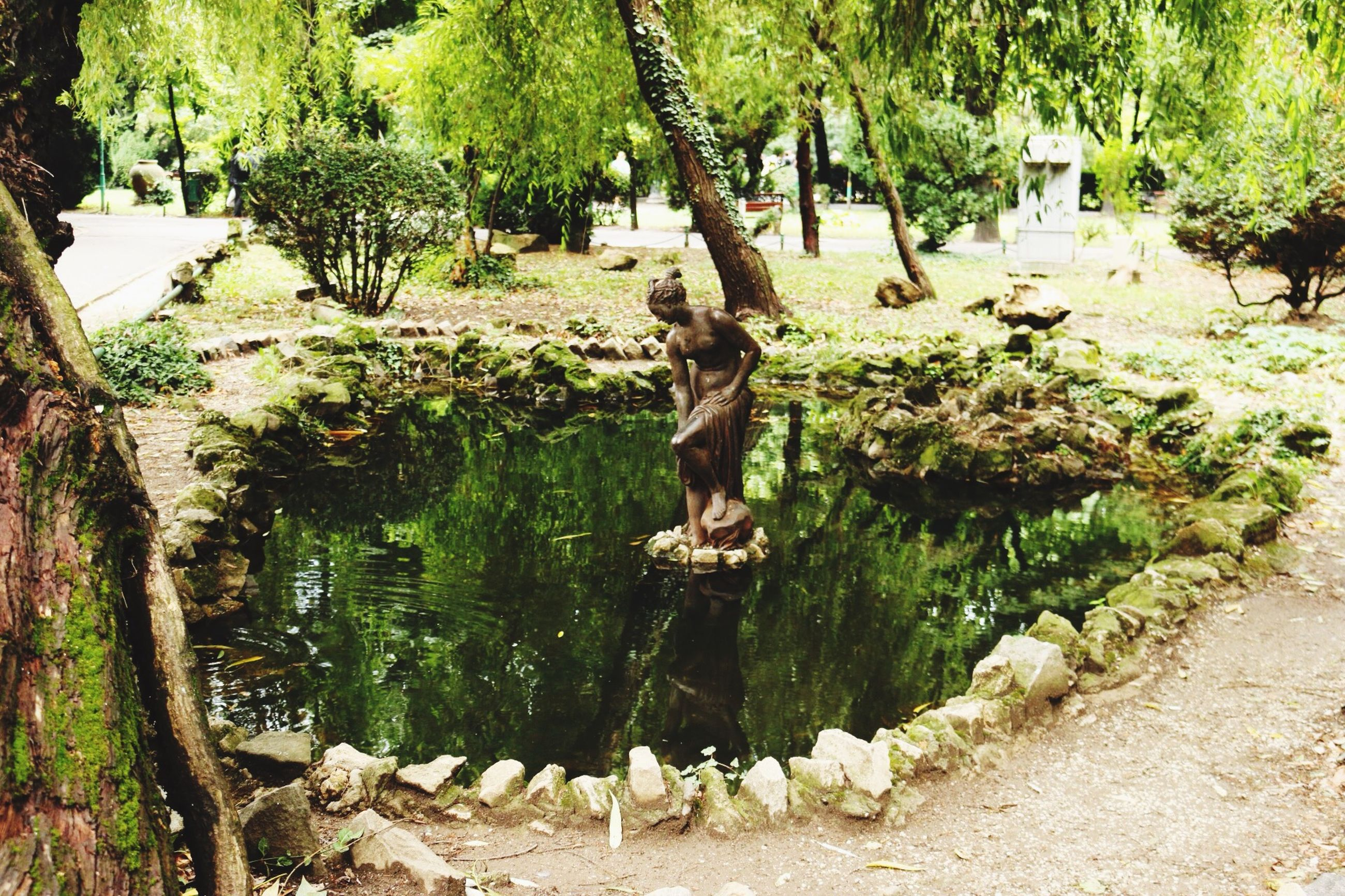 tree, water, growth, tranquility, nature, green color, park - man made space, beauty in nature, tranquil scene, plant, day, pond, outdoors, scenics, tree trunk, rock - object, forest, no people, sunlight, leaf