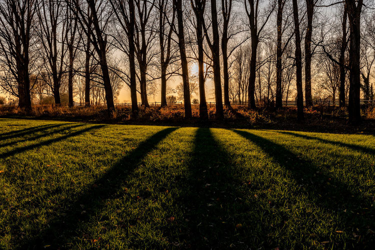 light and shadow Tranquil Scene Tree Plant Tranquility Land Nature Beauty In Nature Scenics - Nature No People Grass Forest Landscape Bare Tree Growth Sunlight Environment Field Shadow Sky Sunset Outdoors WoodLand