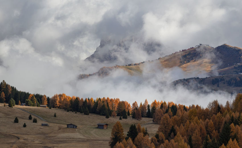 Panoramic view of trees on landscape against sky in dolomites mountains