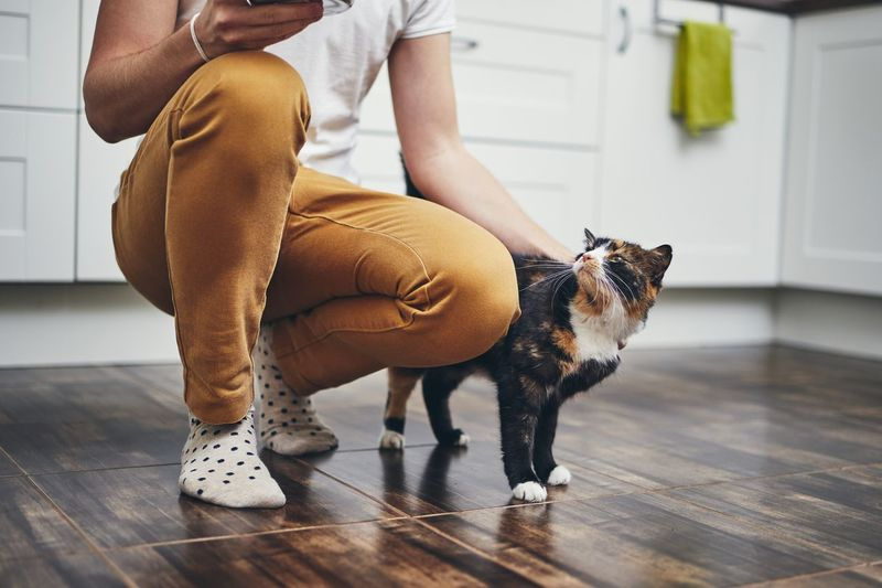 Domestic life with pet. Cat welcome his owner (young man) at home. Men Home Kitchen Cat Domestic Life Pets Domestic Animals One Animal Real People One Person Home Interior Human Leg Lifestyles Embracing Love Cuddling Care Friendship Trust Indoors  Joy Happiness Playing People Cute