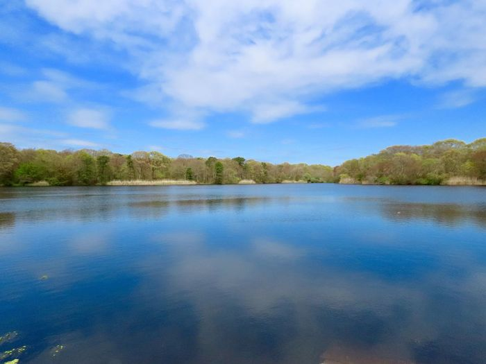Landscape tranquil scene water reflections green foliage blue skies and white fluffy clouds beauty in nature outdoors Water Sky Tranquility Scenics - Nature Idyllic