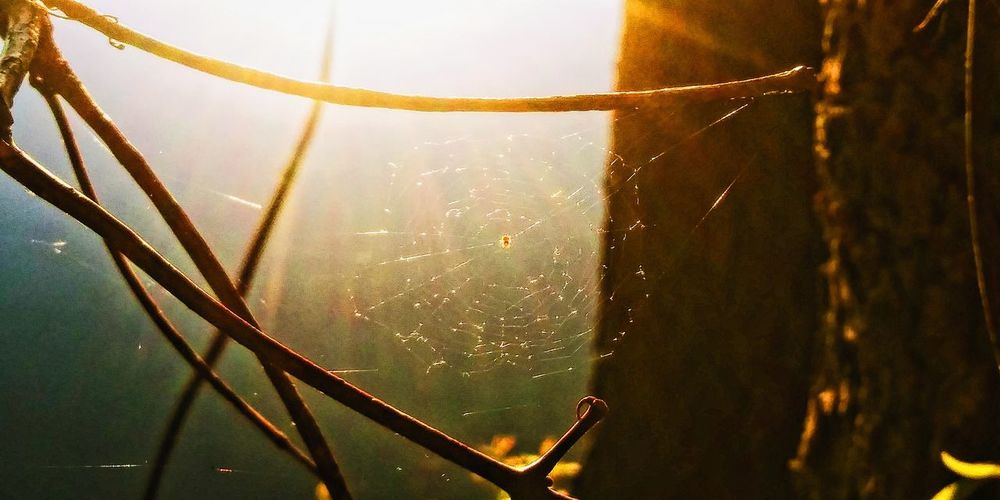 Close-up of wet spider web on plant at night