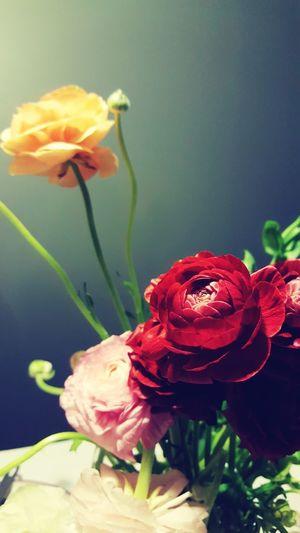 Water Leaf Pedal Rose - Flower Peony  Vase