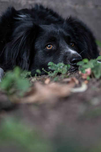 Dog Pets Animal One Animal Domestic Animals Black Color Portrait Mammal Social Issues Looking At Camera Lying Down No People Friendship Outdoors Defocused Day Animal Themes Nature Close-up Retriever Juanmogor
