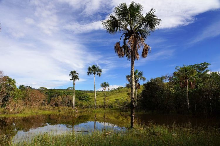 Beauty In Nature Blue Brasil Brazil Chapadadosveadeiros Cloud - Sky Day EyeEm Best Shots EyeEm Nature Lover Grass Grove Growth Landscape Nature Nature No People Outdoors Palm Tree Reflection Sky Tree Tree Area Water Water Reflections Week On Eyeem