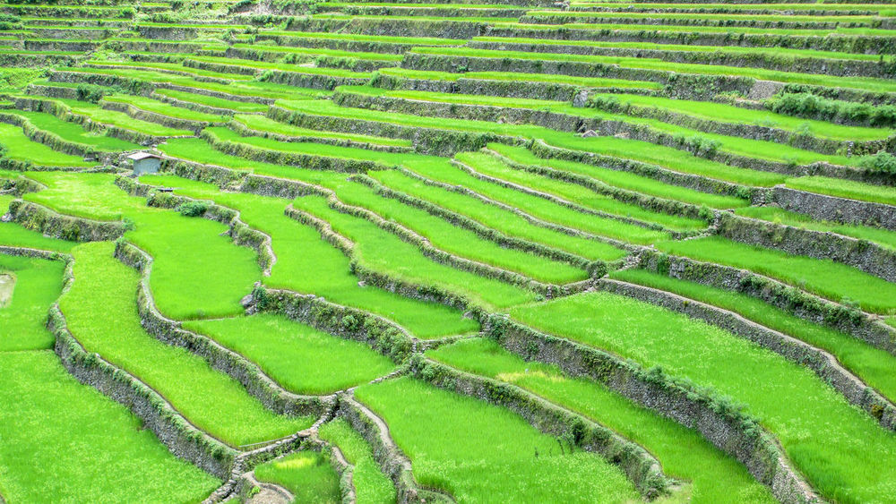 Rice Terraces in Batad, Philippines Abstract Agriculture Asphalt Banaue Rice Terraces Batad Change Day Design Farm Field Footpath Geometry Grass Green Green Color High Angle View No Limits Pattern Rice Terraces Eyeem Philippines Rural Scene Steps Tropical Climate Zebra Crossing Philippines