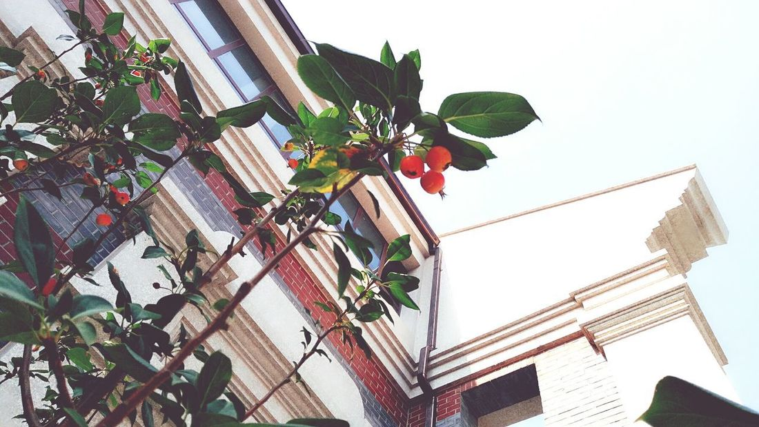 Low Angle View Built Structure Building Exterior Architecture Leaf Outdoors Day Growth Roof Fruit Plant Sky No People Tree Nature Window Box Freshness