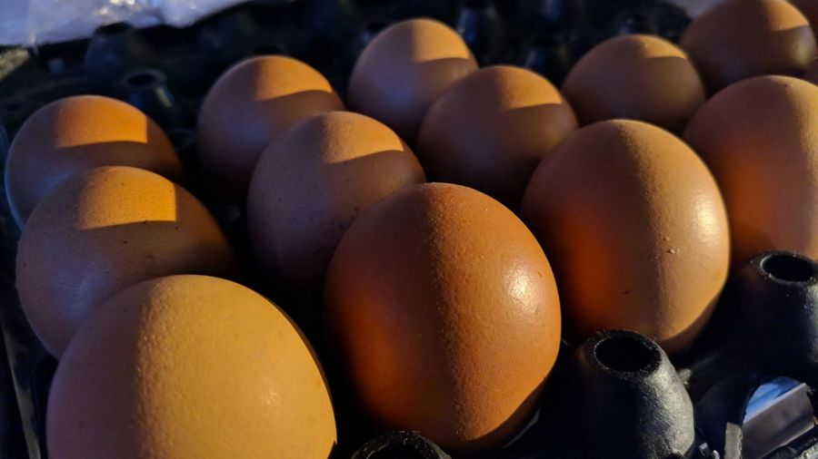 egg Egg Close-up Food And Drink Animal Egg Fried Egg Boiled Egg Easter Egg Nest Egg