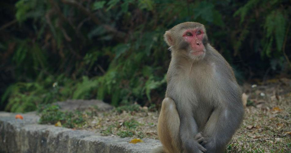 Portrait of monkey sitting on land