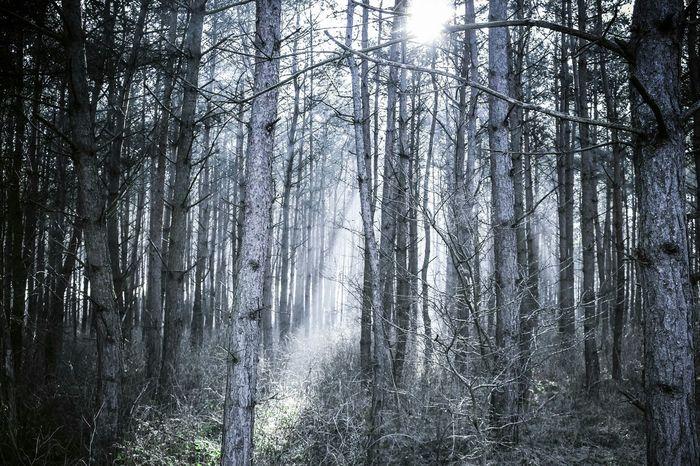 Waldspaziergang Sunrise Wood Good Morning Morning EyeEm Best Shots Outdoors Sunny Day EyeEmBestPics Germany