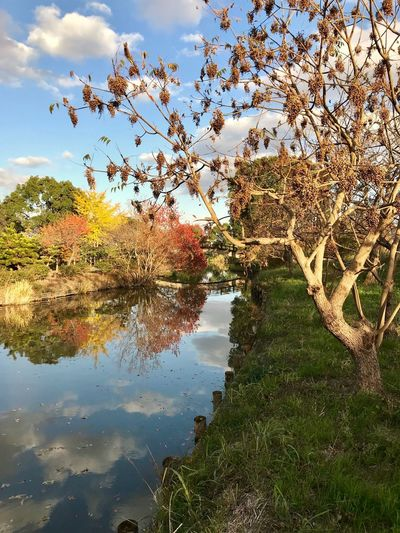 Beautiful Day Autumn Collection From My Point Of View Tree Reflection Nature Lake Beauty In Nature Water Sky Tranquility Growth Tranquil Scene No People Outdoors Day Scenics Branch Landscape The Week On EyeEm Kanzaki Japan