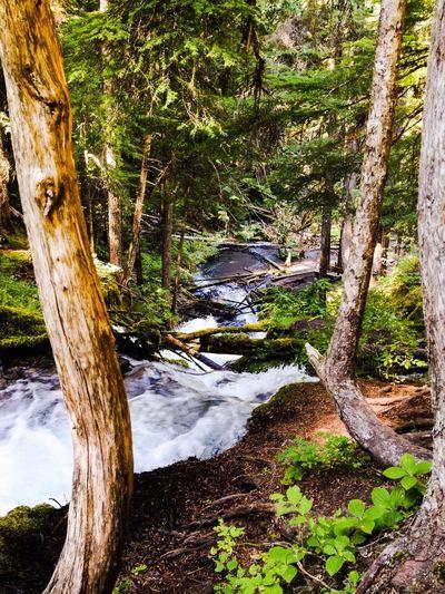 Forrestt Eye Em Nature Lover Enjoying Life Nature