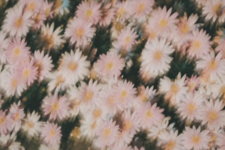 Full Frame Backgrounds No People Nature Plant Growth Beauty In Nature Pattern Abundance Flowering Plant Freshness Textured  Outdoors Close-up Vulnerability  Change Day Fragility Flower Tree