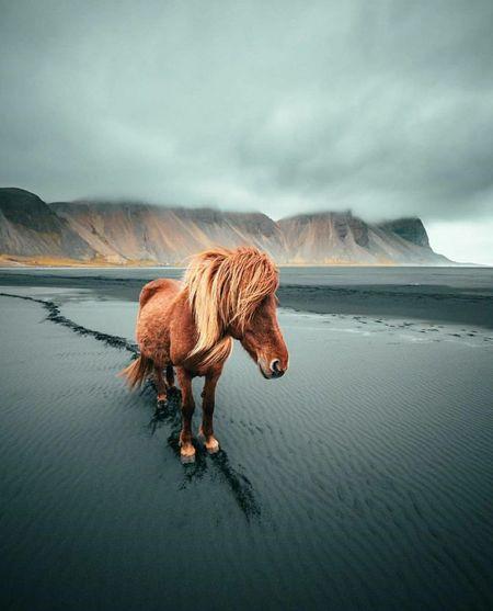 Full length of a horse on mountain against sky