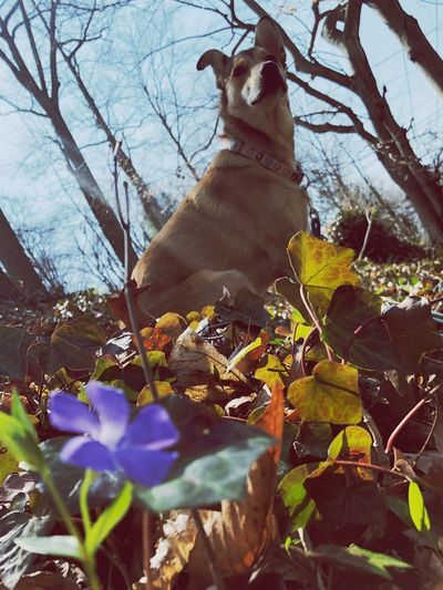 Brooklyn and blue Mammal Pets One Animal Domestic Domestic Animals Animal Themes Animal Dog Flowering Plant Nature Low Angle View Sunlight Flower Day First Eyeem Photo