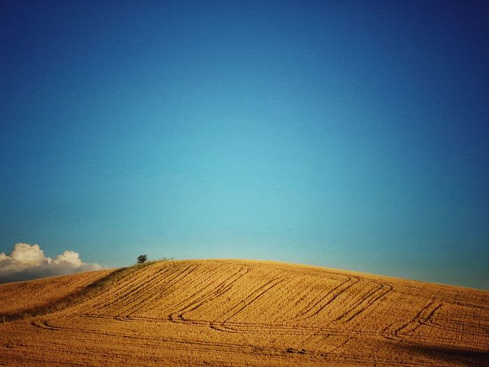 The Great Outdoors – 2016 EyeEm Awards Summer Fieldscape Hillview Hill The Essence Of Summer Lines In The Fields Lines Between Ears Golden Moment