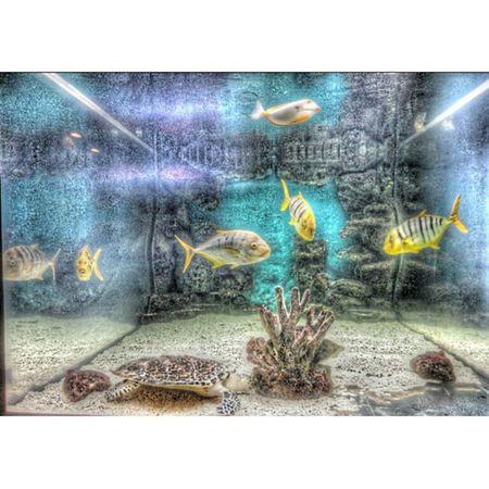 аквариум зоопарк рыбы рыба нашел Классный фильтр морская черепаха Aquarium Zoo Fish Found Cool Filter Sea Turtle Picsart Instasize