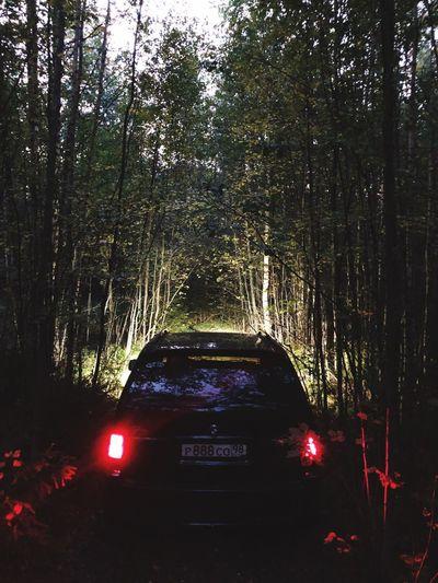 Dark Mode Of Transportation Transportation Tree Car Motor Vehicle Land Vehicle Plant No People Road Travel Indoors  Nature