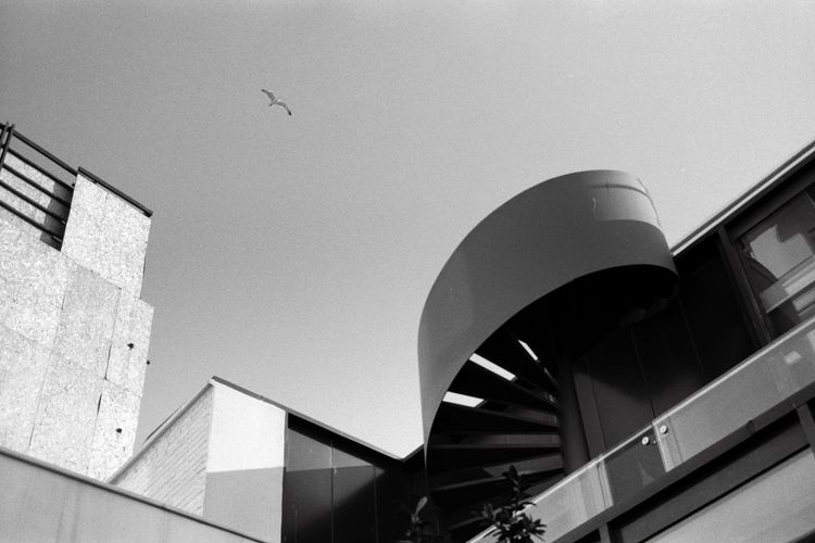 Blackandwhite Analog Photography Seagull Fire Escape Stairs Filmisnotdead Yashica Sky