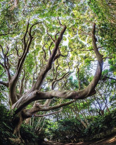 Big Trees Promenade Fisheye Trees 参道 神社 ひたちなか市 茨城県 酒列磯前神社 Shine Tree Plant Growth No People Nature Beauty In Nature Green Color Outdoors Tree Trunk Sunlight Plant Part Land Forest
