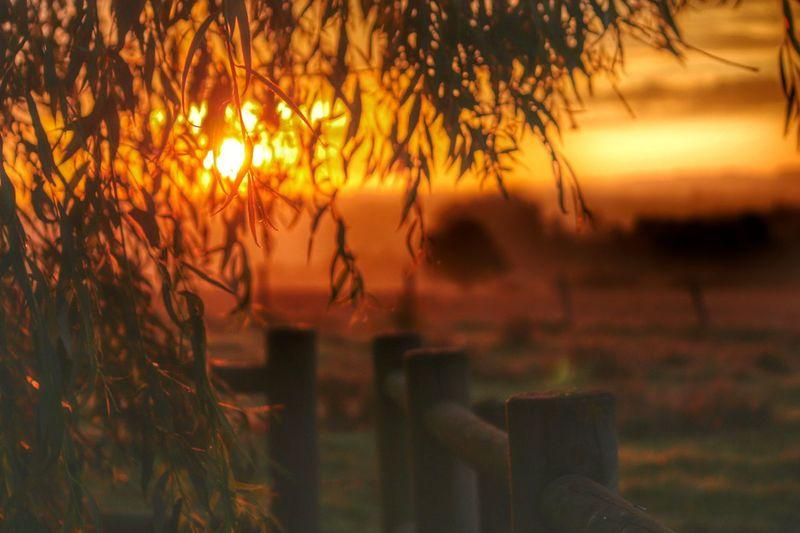 Bon matin EyeEm Best Shots EyeEm Best Shots - Sunsets + Sunrise Sunset #sun #clouds #skylovers #sky #nature #beautifulinnature #naturalbeauty #photography #landscape Light Up Your Life