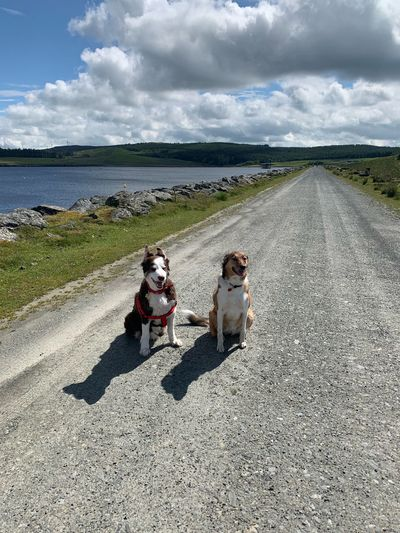 Two dogs at the