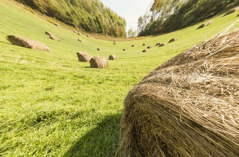 Fish-eye view of hay bales on field