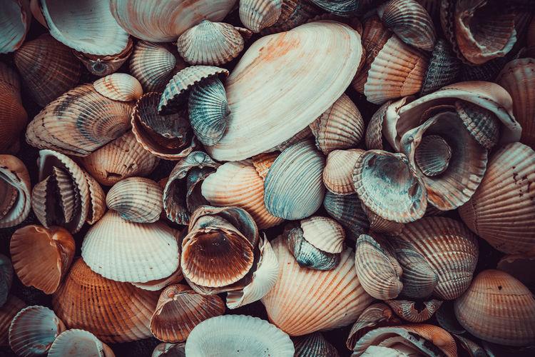 Detail shot of shells