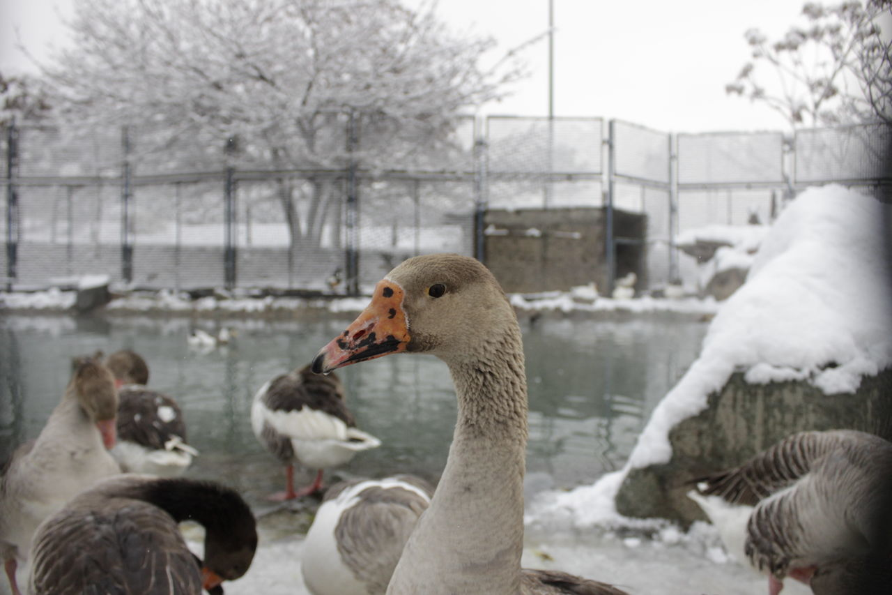 Close-Up Of Birds By Lake During Winter