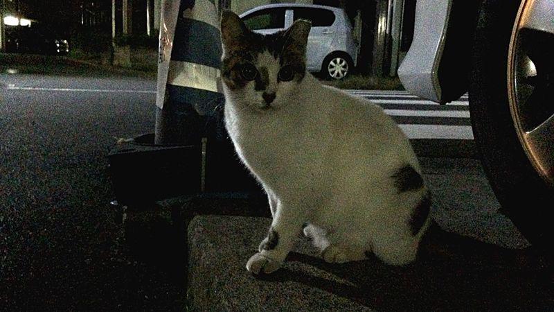 野良猫 Stray Cat 夜ねこ