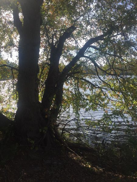 Millsboro Pond in October Trees TreesAndWater Silhouettes Treesinsilhouette Millsborodelaware
