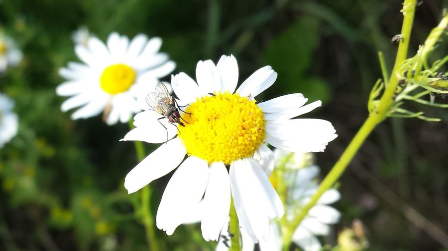 Enjoying Life Landscape_photography Macro_bugs Summertime In Sweden
