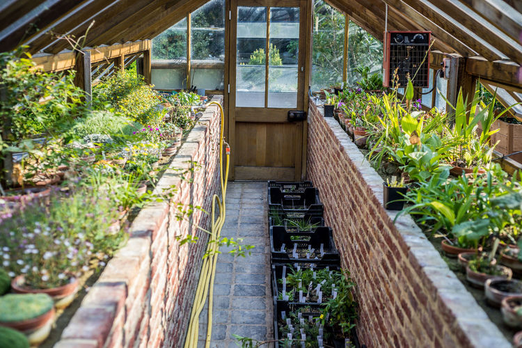 Potted Plants In Shed