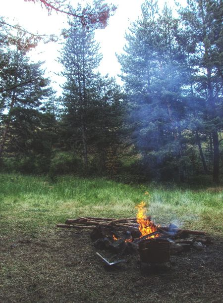 Camping Forest Nature Trees Campfire In The Forest Camp Fire