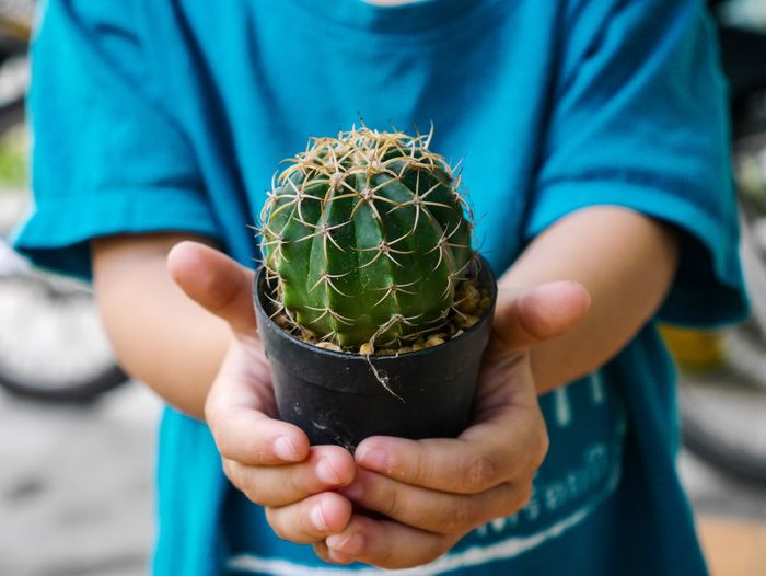 Midsection of child holding succulent plant