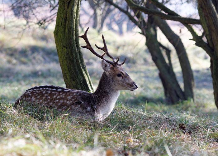 Deer on field during winter
