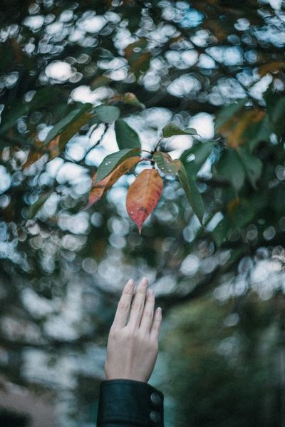 Human Hand One Person Leaf Human Body Part Focus On Foreground Nature Day Real People Fragility Outdoors Tree Close-up Beauty In Nature Holding Water Flower Freshness Branch People Flower Head