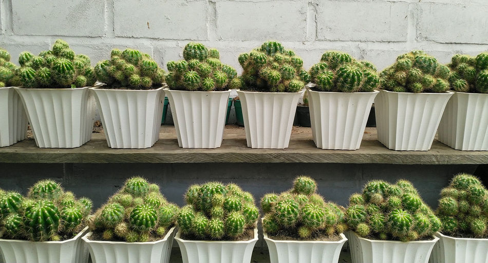 Potted plants at market stall against wall