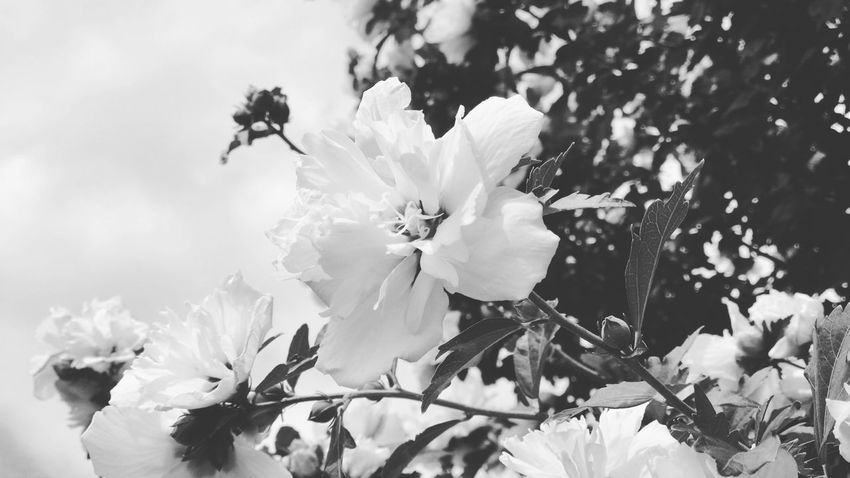 Flower Fragility Petal Nature Growth White Color Beauty In Nature Freshness Flower Head Blossom Botany Springtime Day No People Stamen Outdoors Close-up Insect Tree Blooming