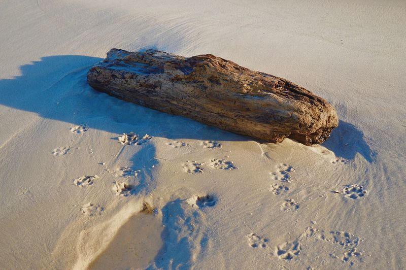 High angle view of driftwood on sand at beach