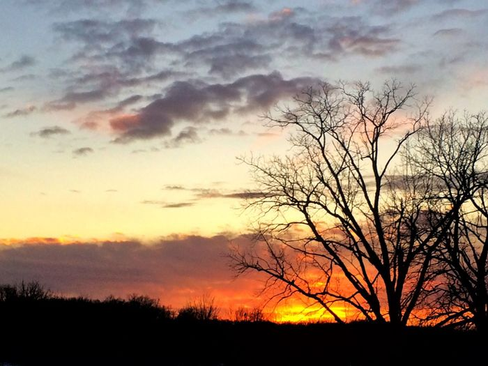 Sunsets Evening Sky Evening Sunset Beauty In Nature Silhouette Bare Tree Orange Color Nature Sky Scenics Tranquil Scene Tree Tranquility Cloud - Sky No People Outdoors Day Landscape