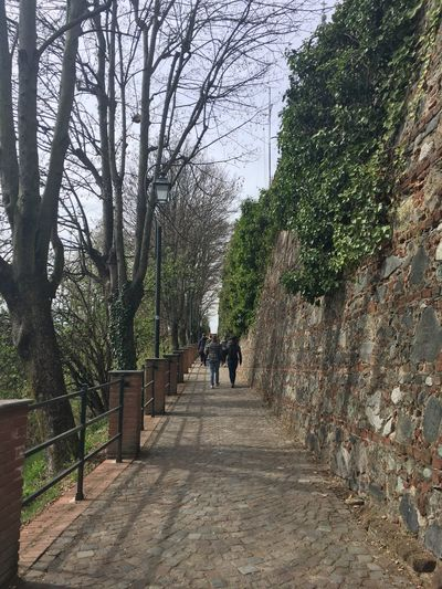 Castle Wall Italy Wall Tree Plant Direction The Way Forward Real People Rear View Walking